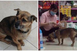 Tak Tahu Majikan Sudah Meninggal, Anjing Ini Setia Menunggu 3 Bulan di RS